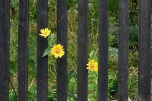 fence care